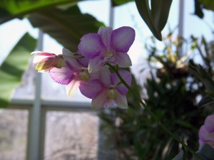 Orchid_Show1