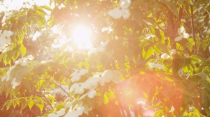 plant-life-sun-wash_MyJTzdfd